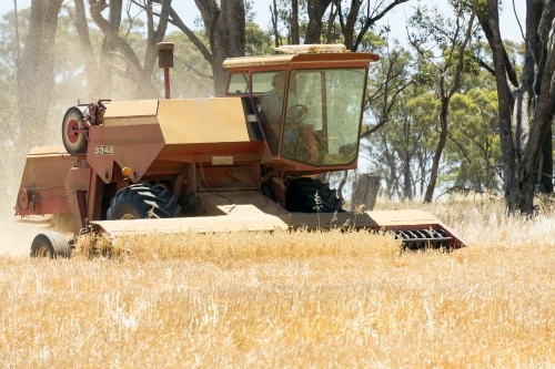 A harvester working in a farmers grain crop
