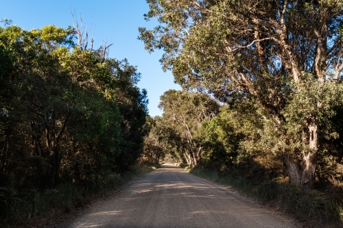 A long gravel bush track road surrounded by green leafed trees on a blue skied, summers day.