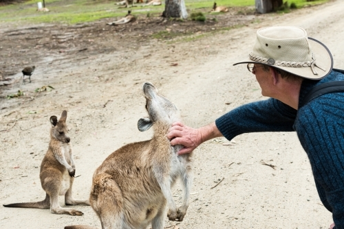 A Male tourist scratching a kangaroo's neck with joey looking on