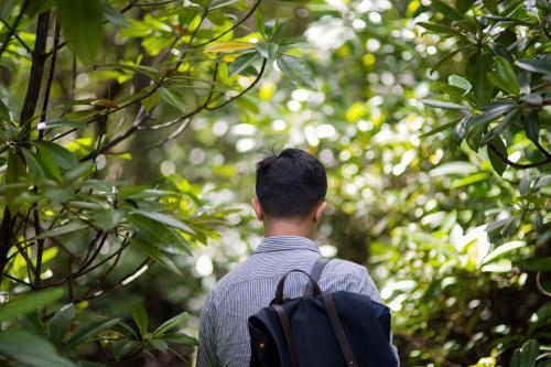 A man walks through bushland along the Daintree river