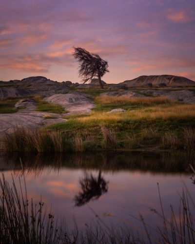 A single tree surrounded by boulders beside a pond at sunrise