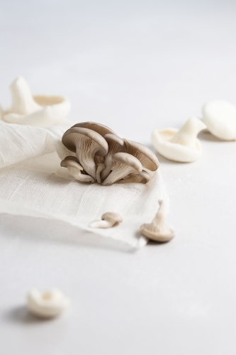 A variety of mushrooms on a white background