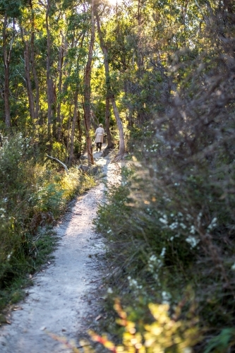 A walker travels along a gravel walking track in amongst an open dry eucalypt forest