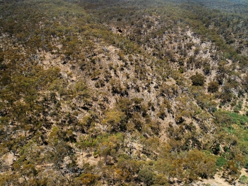 Aerial view of bushland