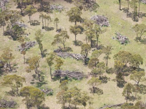 Aerial view of scattered gum trees amongst piles of fallen trees