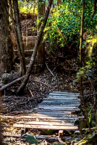 An old wooden bridge crosses a stream in a fern glade, with steps leading away