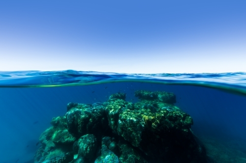 An underwater split shot of a coral reef rising out of deep blue water on the Great Barrier Reef