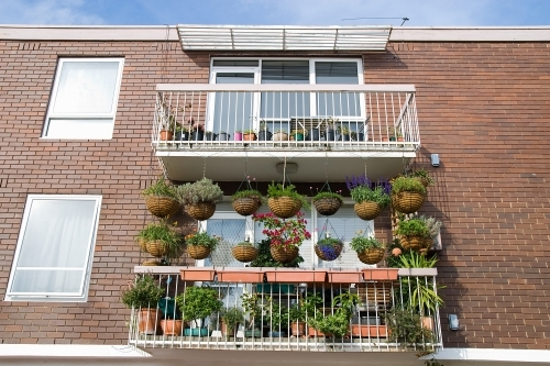 Apartment balcony covered with hanging baskets and plants