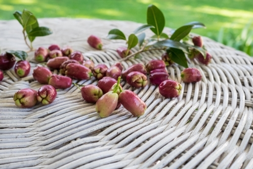 Lilly Pilly berries on white rattan table