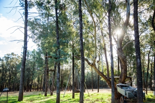 Sun flare through trees with boat and flying fox zipline
