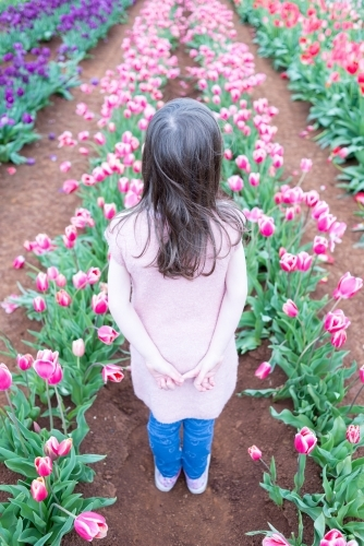 Back view of a young girl standing in a tulip field
