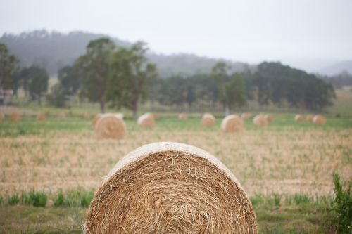 Bales of hay in a paddock