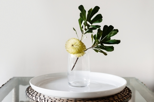 banksia flower in a glass