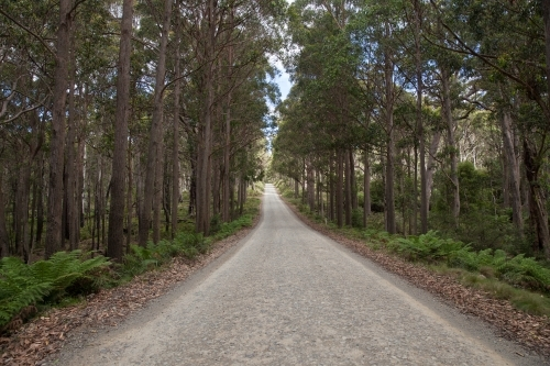 Barrington Tops Forest Road