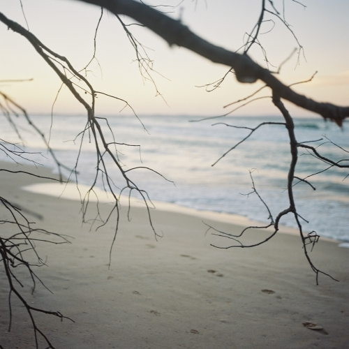 Beach Sunset Through Branches