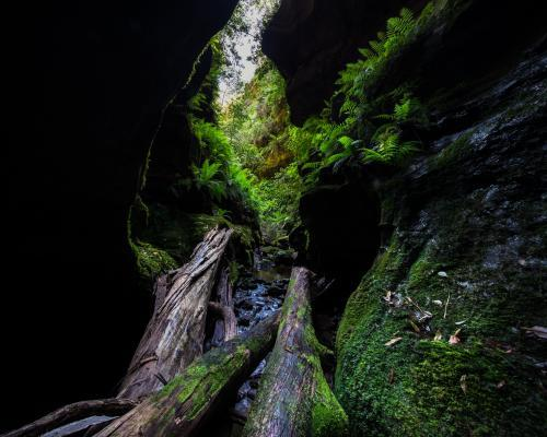 Beautiful narrow green mossy canyon in Blue Mountains National Park