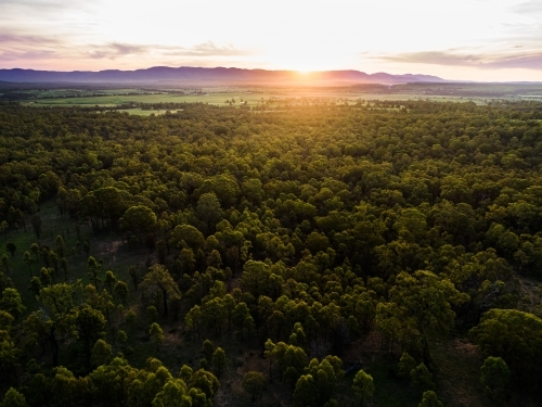 Beautiful sunset light over landscape of trees and farm land in Hunter Valley