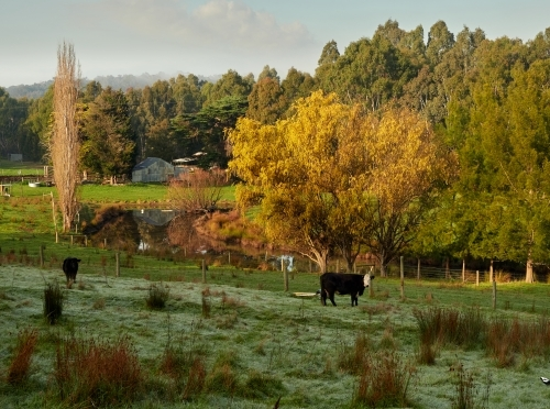 Beautiful Victoria Farm in Autumn