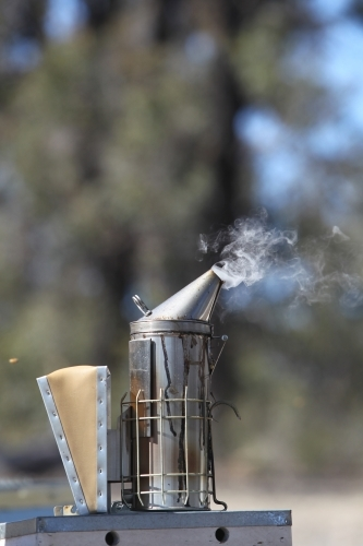 Bee smoker in Victorian bushland