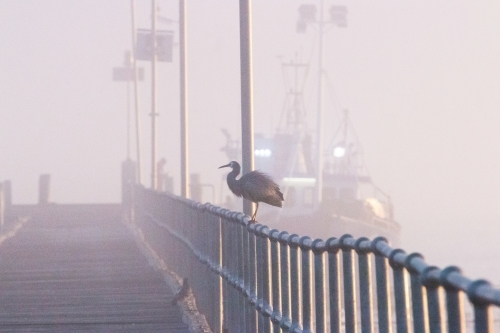 bird perched on a jetty railing in fog with fishing boat in background