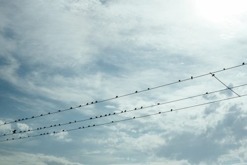 Birds on a wire against cloudy sky