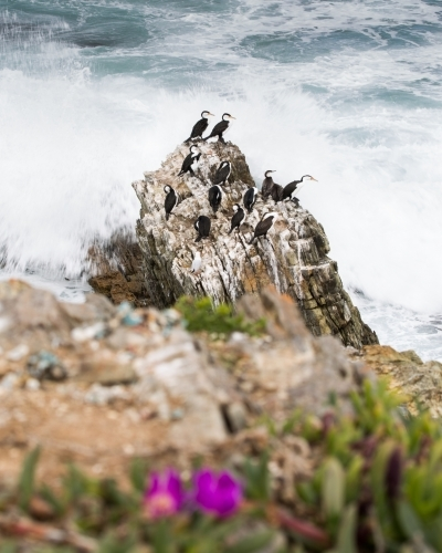 Birds sitting on rock being crashed by ocean waves