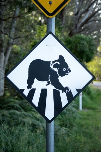 Black and white road sign warning that koalas cross here
