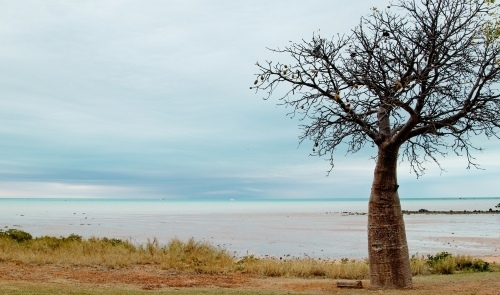 boab tree at beach on stormy day