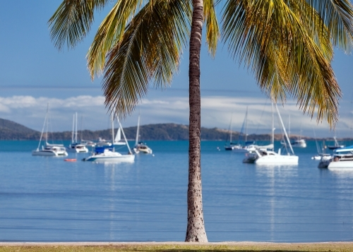 Boats and palm tree at Airlie Beach.