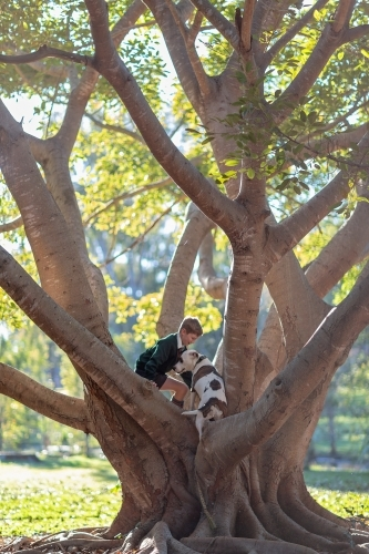 Boy and dog climbing tree with sunlight in branches