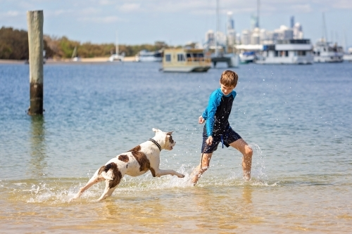 Boy and dog playing at the seashore, Beach Fun
