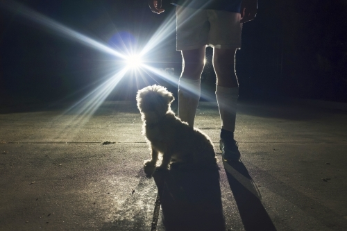 Boy and his dog standing in front of headlights at night