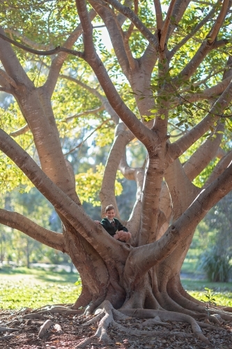 Boy climbing tree with sunlight in branches
