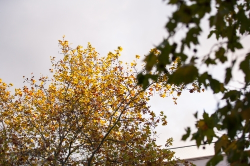 branches and leaves in autumn