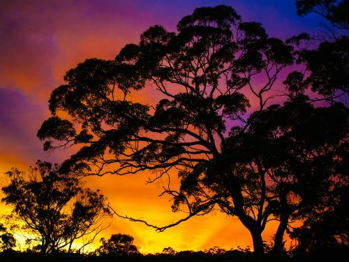 Bright coloured sunset with trees silhouetted in foreground
