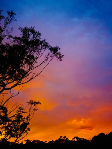 Bright colourful sunset with tree silhouette