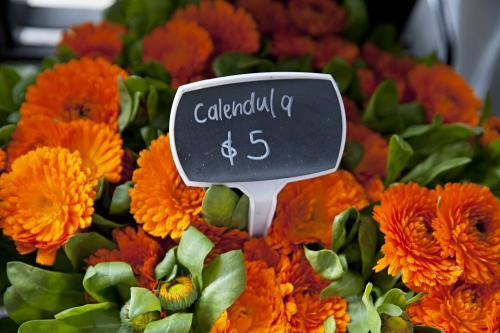 Bright orange Calendula flowers for sale