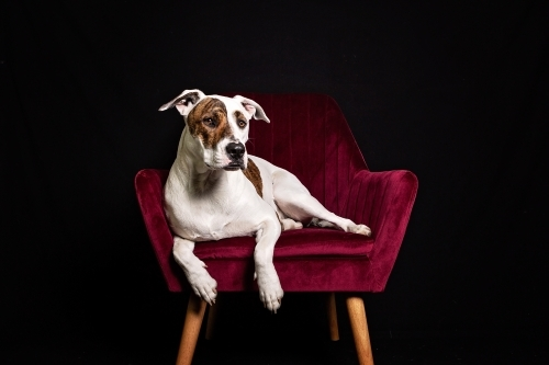 Bullarab sitting in red velvet chair in studio