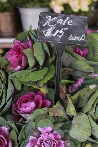 Bunch of fresh kale with pink flowers for sale at local market