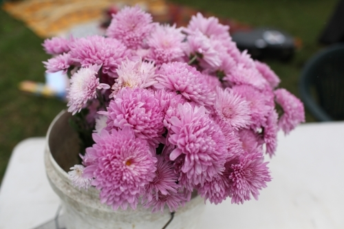 Bunch of pink chrysanthemums at a market