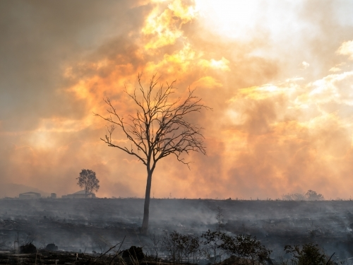 Burnt tree silhouetted against yellow orange billowing smoke