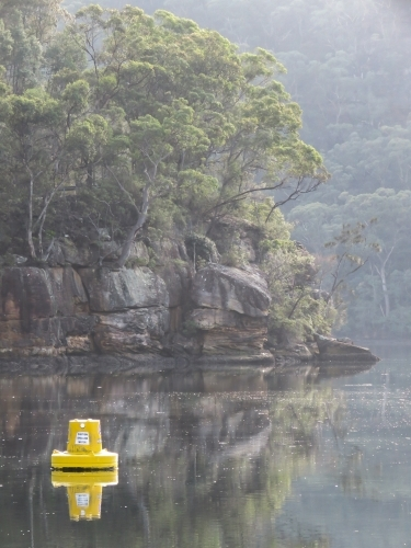 Bush and early morning mist on still water, with a navigation buoy
