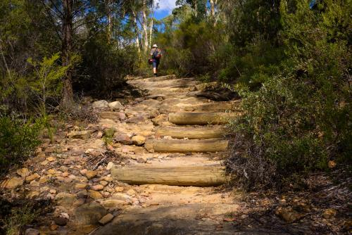 Bush walking path with log steps and man in the distance.