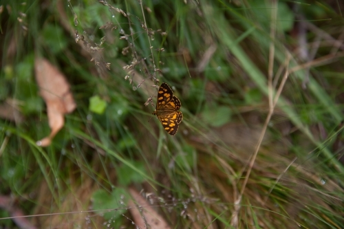 Butterfly resting on a damp stalk of grass
