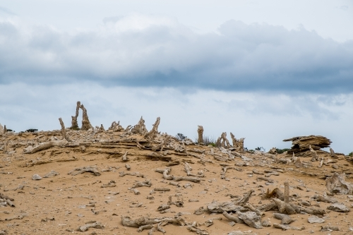 Calcified Forest, King Island