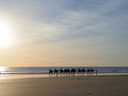 Camel Train on Cable Beach in the Evening