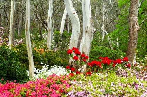 Manicured gardens in the Blue Mountains of NSW