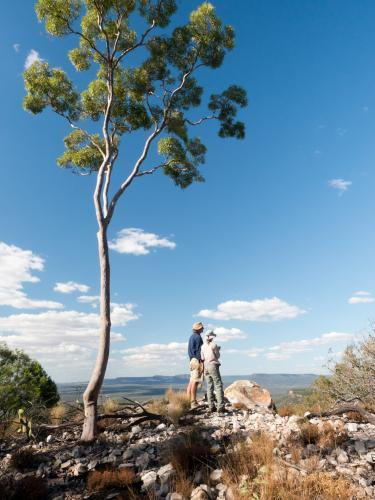 Two people under a gum tree looking out at a view