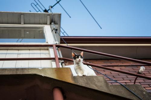 Cat looking down from balcony