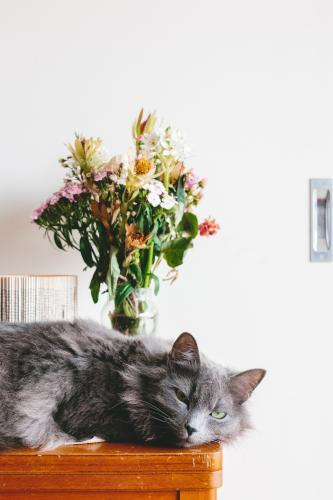 Cat lying on a table with flowers